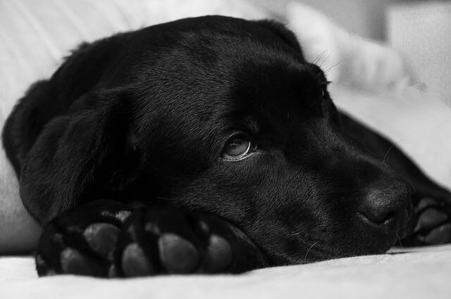 come curare la febbre al cane