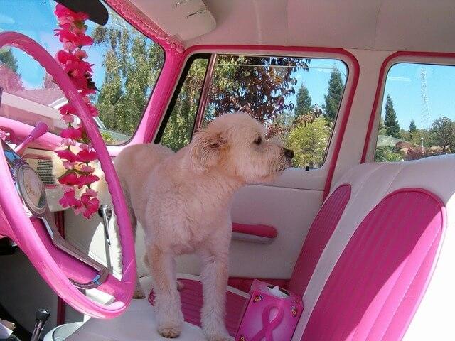 estate: pericoli e rischi per il cane in auto durante l'estate