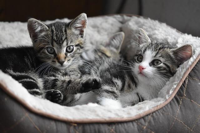 Preparare la casa per l'arrivo di un nuovo gatto