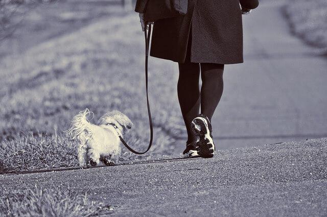 Cosa è meglio per il tuo cane: il guinzaglio o l'imbracatura?