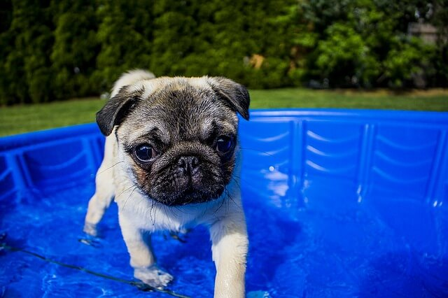 La piscina è sicura per i vostri animali domestici?