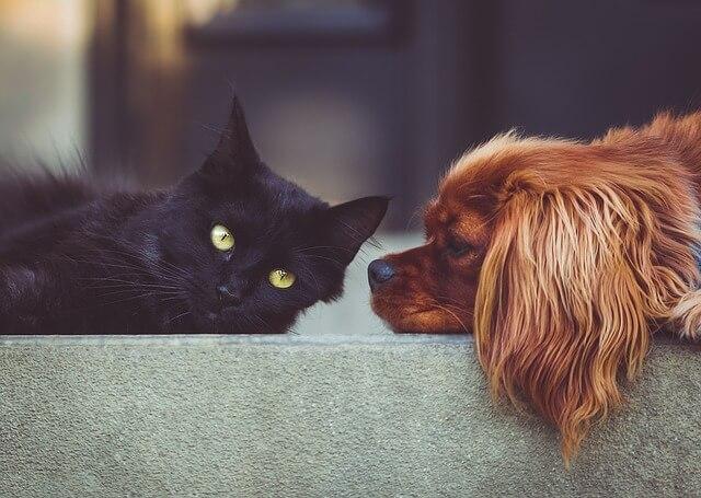 Come conoscere i segni di allergie negli animali domestici