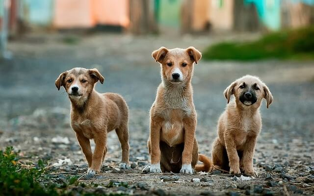 Quali sono le razze canine più pulite?
