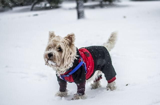 Abbigliamento per cani, tutto quello che c'è da sapere.
