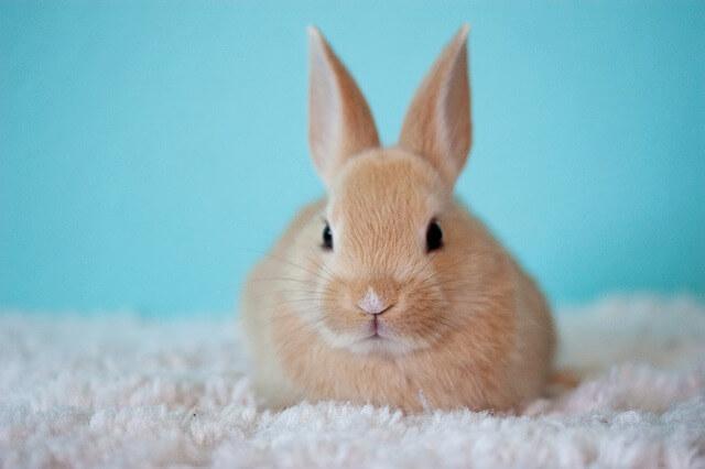 Suggerimenti per la fare la lettiera dei conigli
