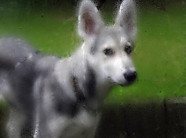 Come curare gli animali domestici durante un'emergenza meteorologica