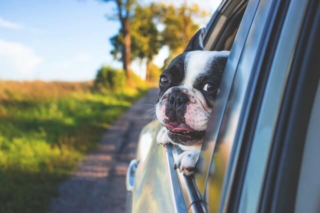 Suggerimenti per viaggiare con i cani in auto