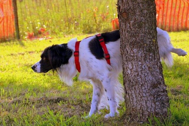 Evitare incidenti domestici: evitare che i nostri animali facciano pipì in casa