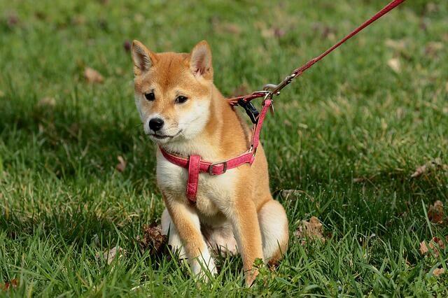 dove acquistare il guinzaglio per cani