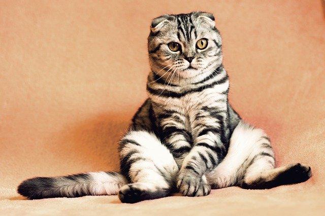 Ecco il dizionario per parlare con il vostro gatto